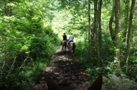 Hell's Hollow Adventure Outpost | Activities in Blue Ridge | Cabin Rentals of Georgia