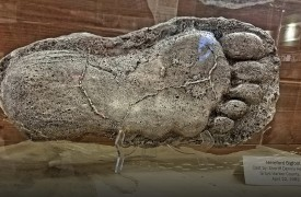 Expedition Bigfoot | Cabin Rentals of Georgia | huge foot enclosed in glass at museum