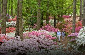 Callaway Gardens | Day-Trips | Cabin Rentals of Georgia