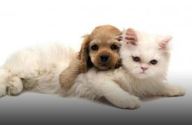 Love Dogs and Cats Too | Shopping in Blue Ridge
