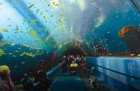 Atlanta Georgia Aquarium | Cabin Rentals of Georgia | aquarium tunnel as you walk through