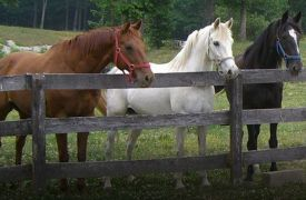 A Step Above Stables | Activities in Blue Ridge