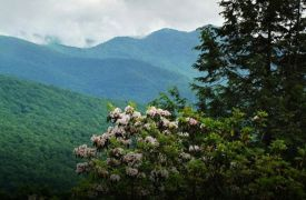 Spring Things To Do in Blue Ridge, GA | Cabin Rentals of Georgia | mountain laurel against a backdrop of mountains