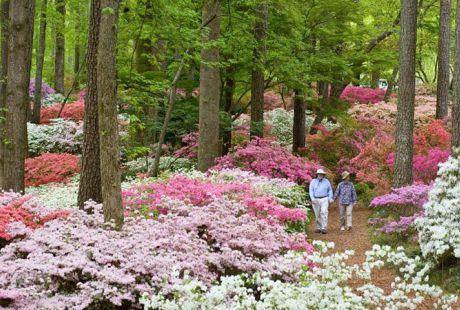 Callaway Gardens. , ~. +2. Photos