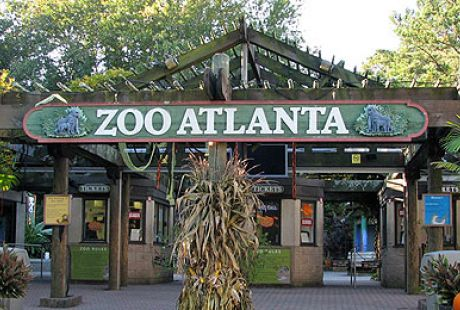 Zoo Atlanta coupons offer lots of discount on special offers. atlanta zoo best coupons are available in androidmods.ml so visit the website, acquire the coupons and enjoy the offer. We have zooatlanta coupon codes, discounts and coupons for you to choose including 14 zooatlanta promo codes and sales on Jul, 12,