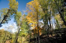 A Rolling River Cabin   Cabin Rentals of Georgia   Exterior