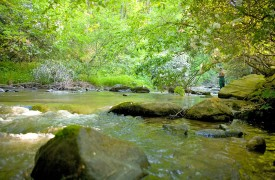 Crooked Creek Cabin | Cabin Rentals of Georgia | Trout Fishing