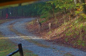 A Rivers Bend | Cabin Rentals of Georgia | Nature's Wildlife