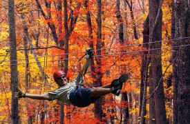 Skydance | Cabin Rentals of Georgia | 3.5 Miles To Ziplining