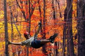Arcadia | Cabin Rentals of Georgia | 7 Miles From Ziplining